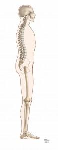 ideal-posture-116x300
